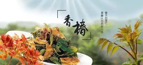 今春这种蔬菜每斤售价80元,学会种植你也能实现财务自由!