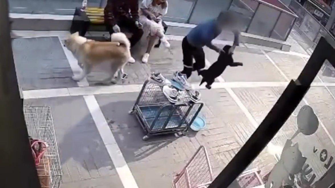 情侣在宠物店门口吵架,男子当众摔狗,送往医院后盆骨破裂