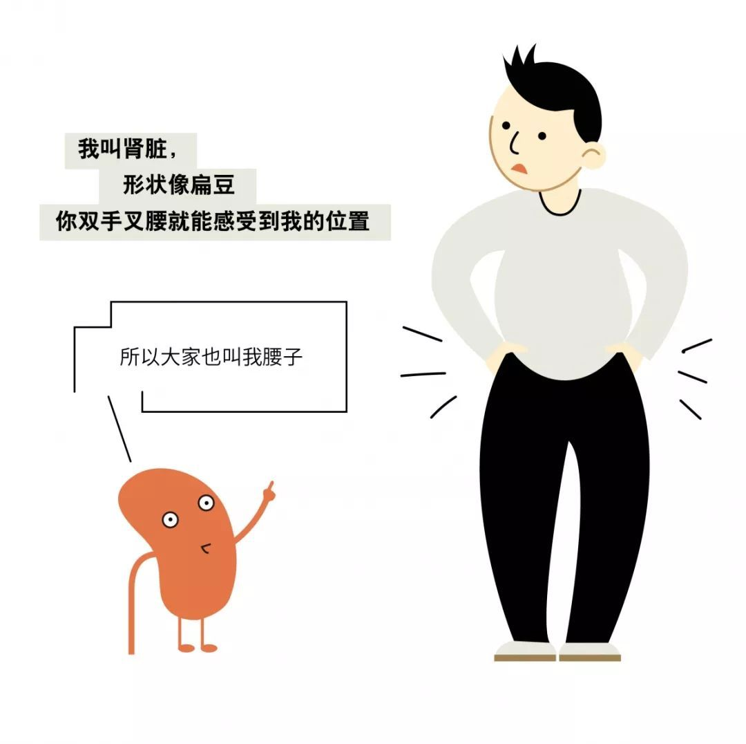 """【名医】""""我""""是你的肾!最讨厌你吃太咸、熬夜……"""