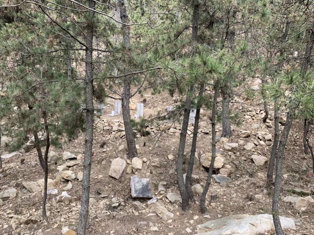 排查!严处!整改!5A景区里6万座坟墓,省委领导批示