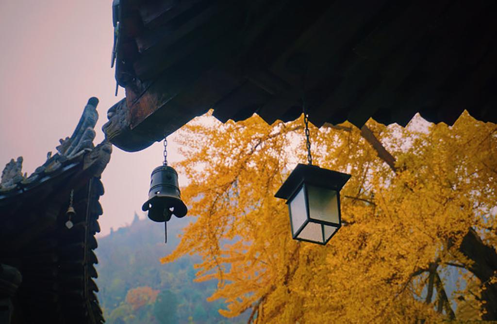 在西安欣赏最美的千年银杏树,岂有来过终南山古观音禅寺