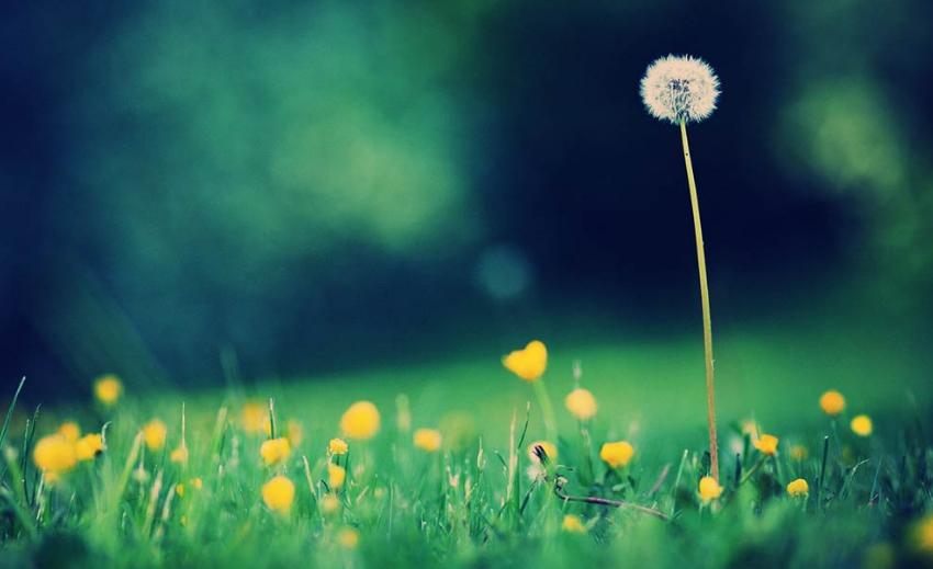 4月中旬,好运当头照,事业高升,到老都生活幸福的生肖