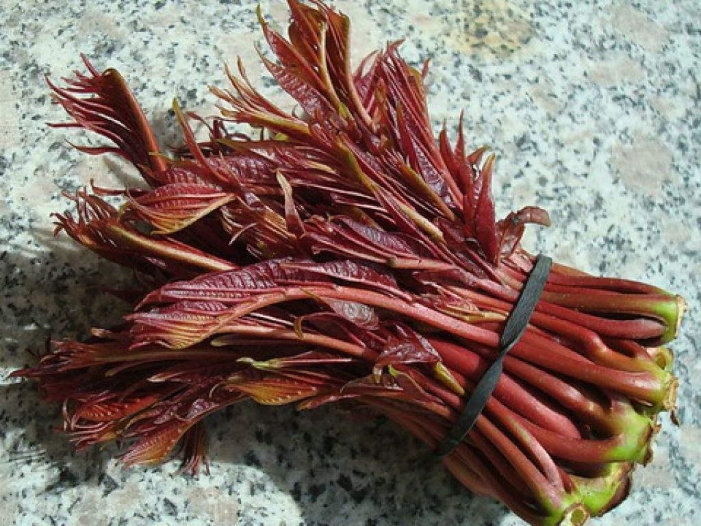 人参一斤,不如它一株,降血压防三高,春天吃它最好!
