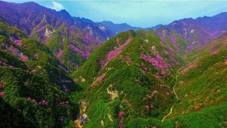 【太平国家森林公园】4月13/14日赏紫荆花海,观彩虹飞瀑