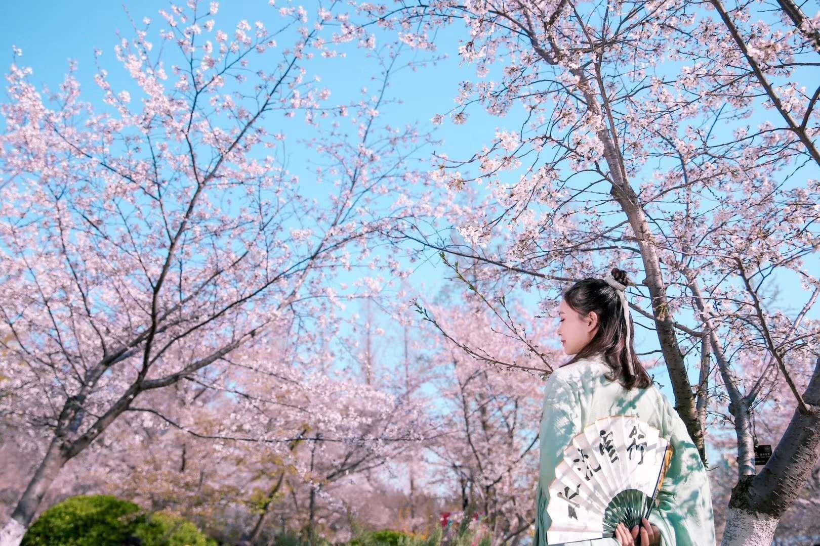 赏花为什么非得穿和服?在京郊穿汉服一样美
