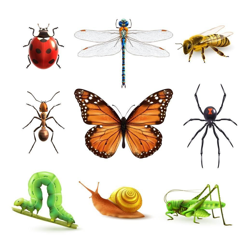 全球40%以上的昆虫物种正在减少,1/3处于濒危状态,