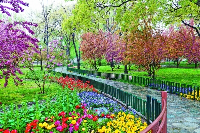 春日美景 游園踏青_中國