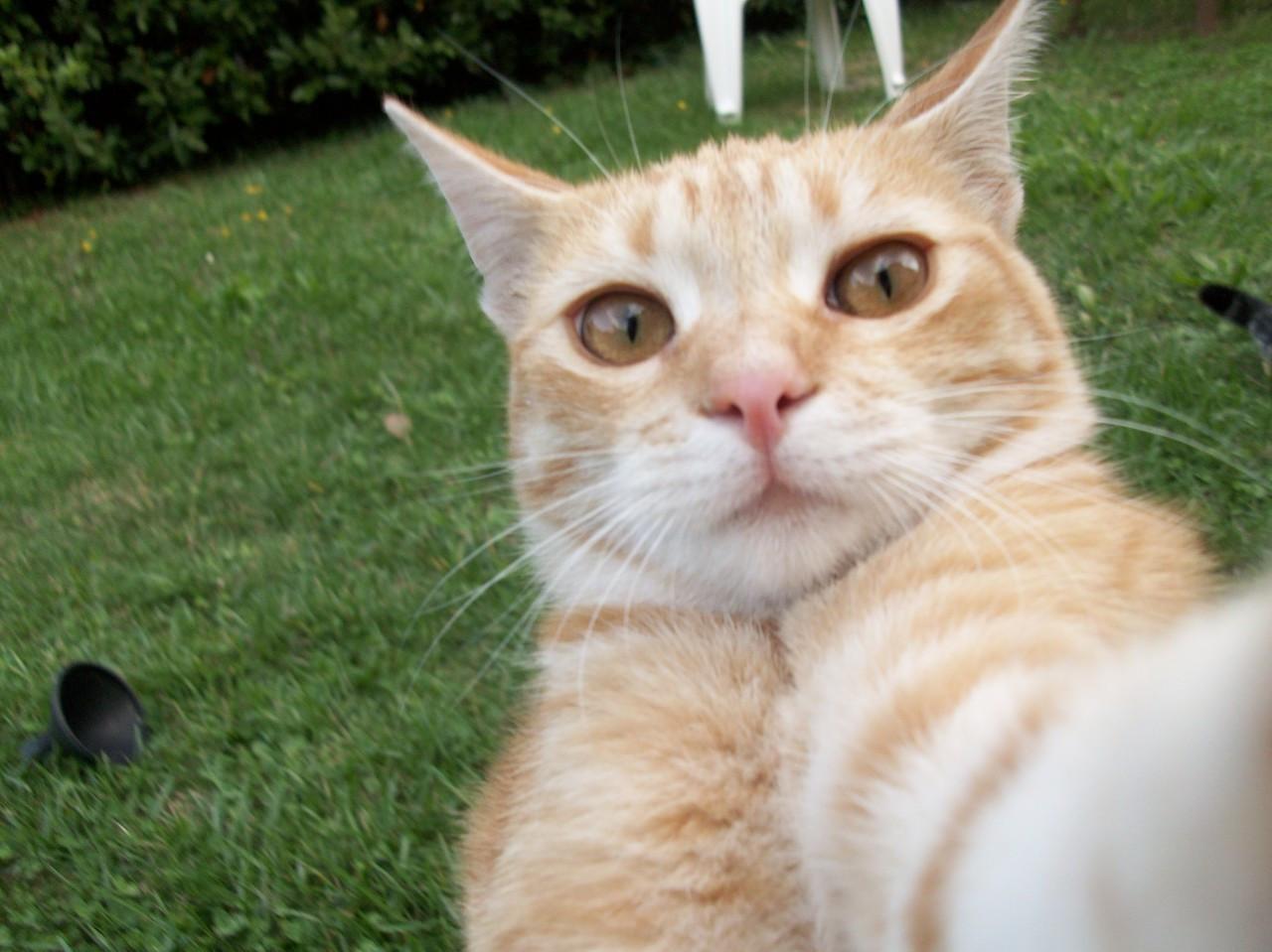 權威學術期刊證明,貓咪其實可以聽懂你叫它,鏟屎官你盡管大聲喊_名字
