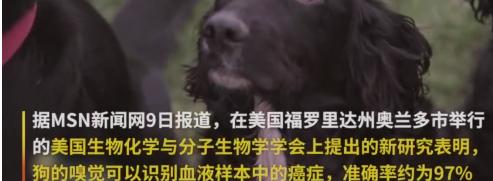 最新研究狗狗能闻出血液中的癌症,准确率高达97%