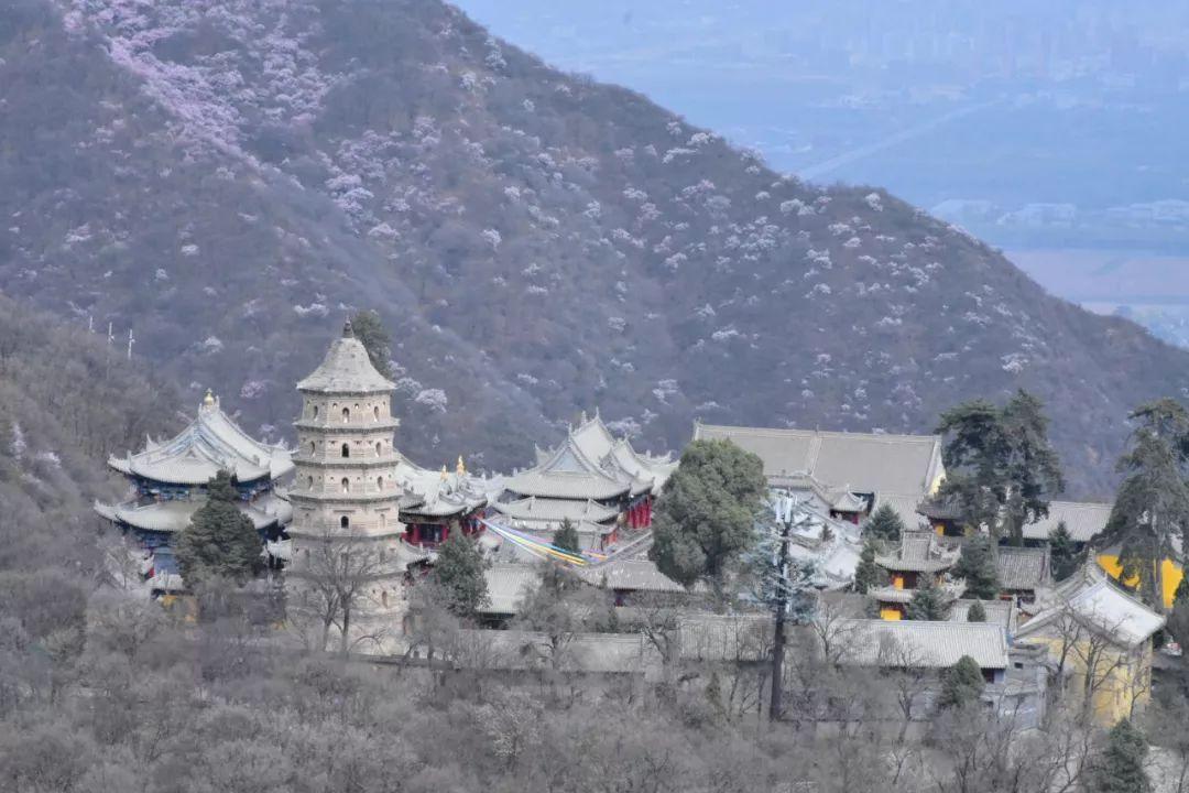 拜山崆峒,最后还是为了让我知道这座山的茶故事
