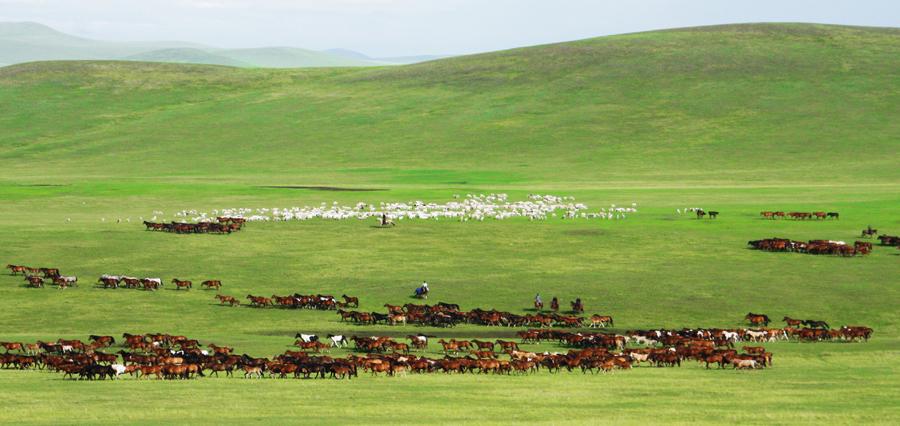 七月,相约草原,今生最美的约会—畅游醉美呼伦贝尔大草原