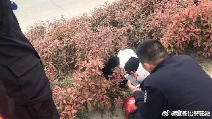 群众报警称在草丛中发现熊猫,民警兴冲冲出警,结果…哈哈哈