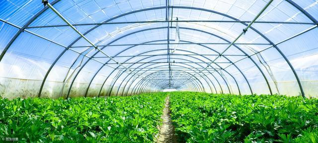 """ç±3脂蔬菜温室大棚ç""""Ÿäo§åŽ'家,连栋温室大棚å""""a家好"""