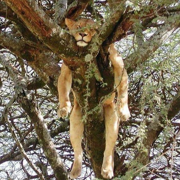 动物们这些奇葩的睡姿,也是没谁了