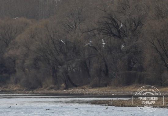 春天 到南湖公园来看海鸥!