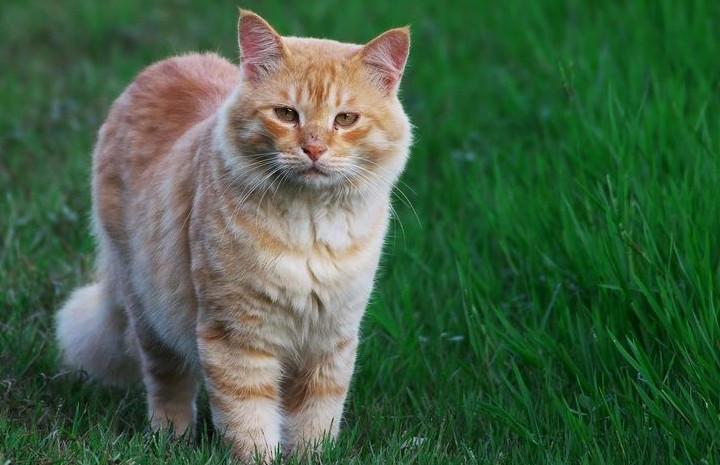 如何消除猫咪身上的异味