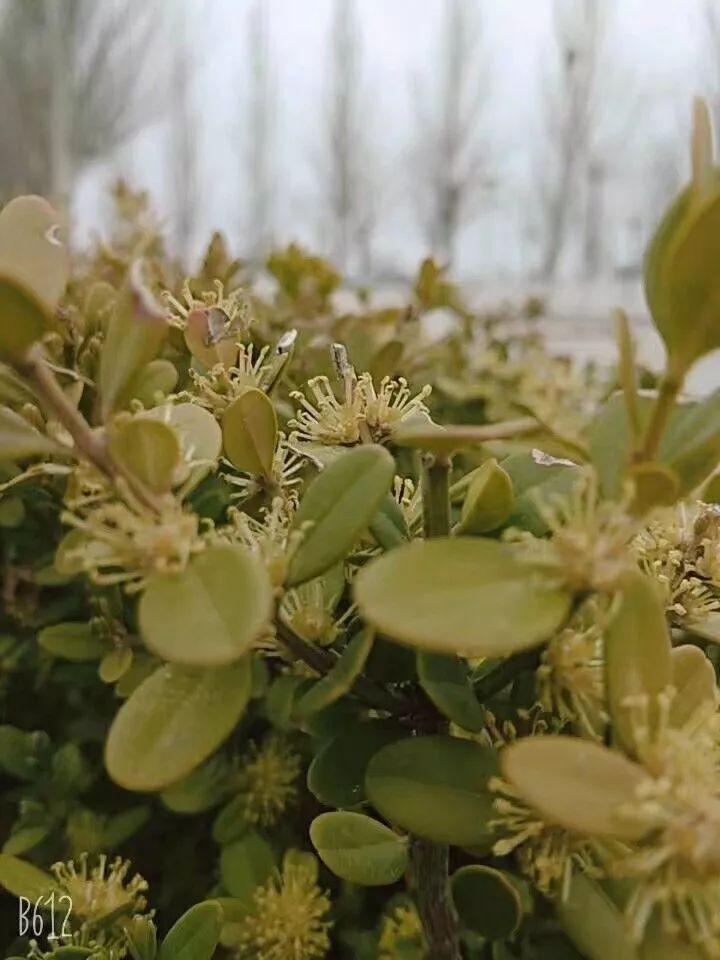 满园碧色   草木茂盛   在四季流转中回归