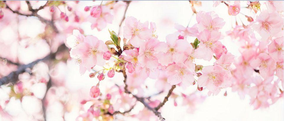 【包头青山万达】呷哺呷哺丨会员储值,约惠春天!