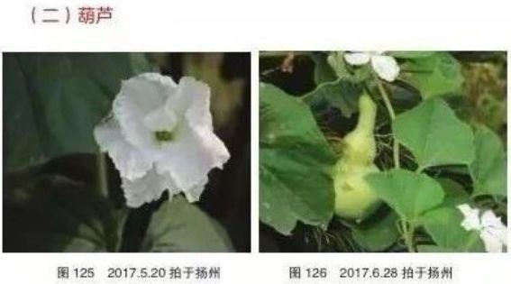 江都一妈妈3年拍下366种植物的照片,自费出书教女儿!
