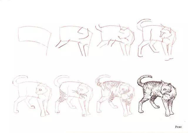 猫的22种画法 7 猫咪线描速写教程之2 3站立姿态 素描教程 学画画 我爱 ...
