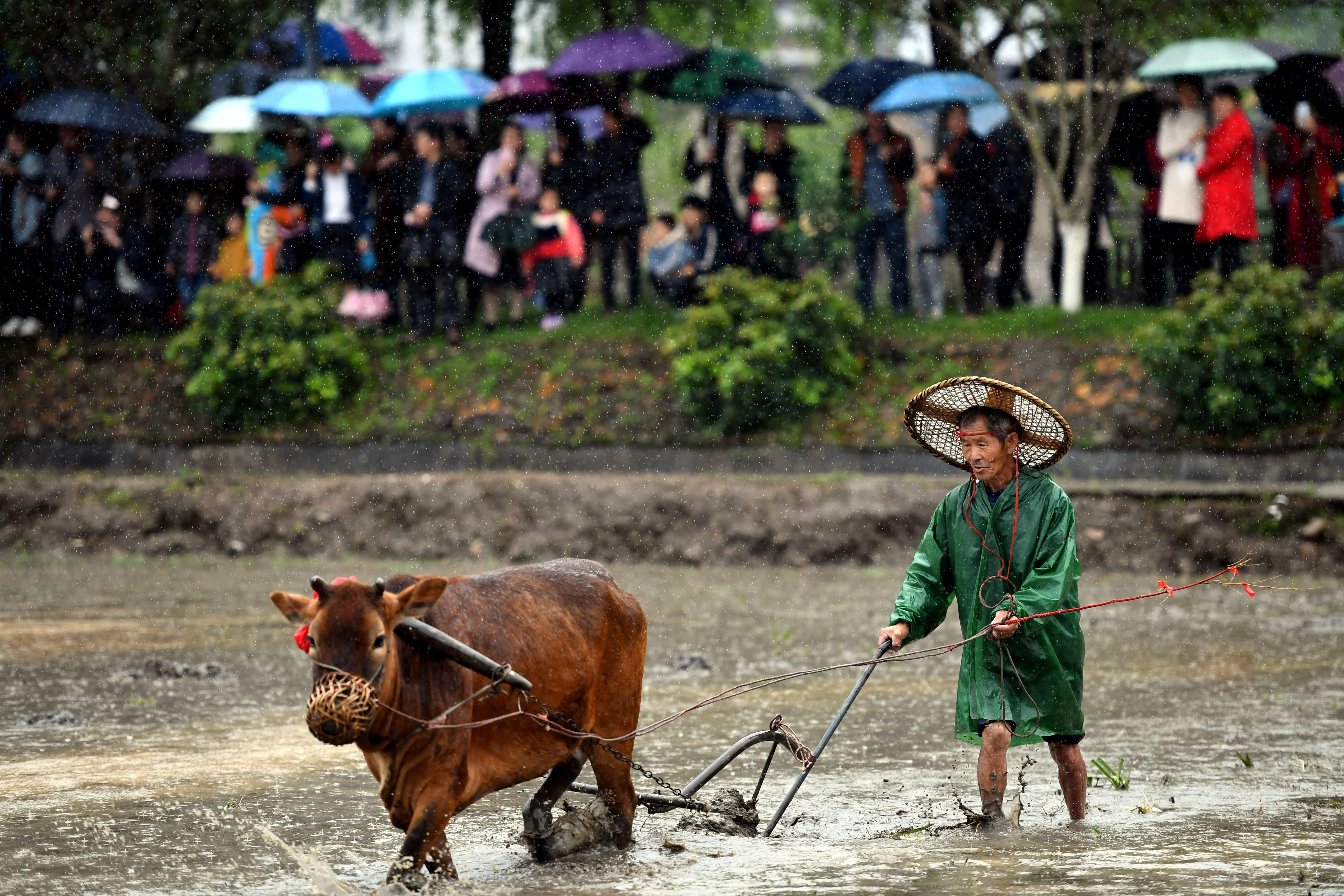 闽西连城:客家春耕节传承农耕文化