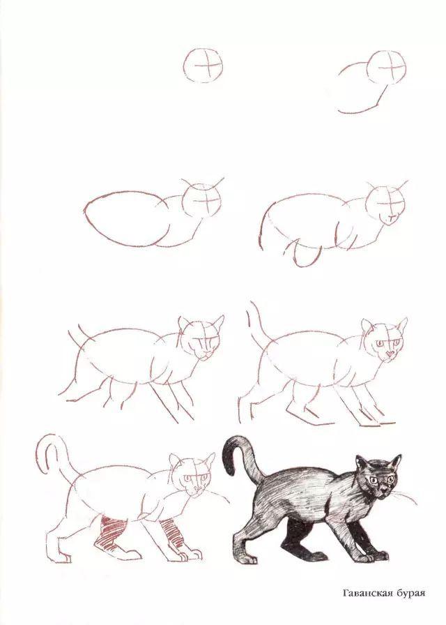 三、教你画20种猫的素描构造步调图