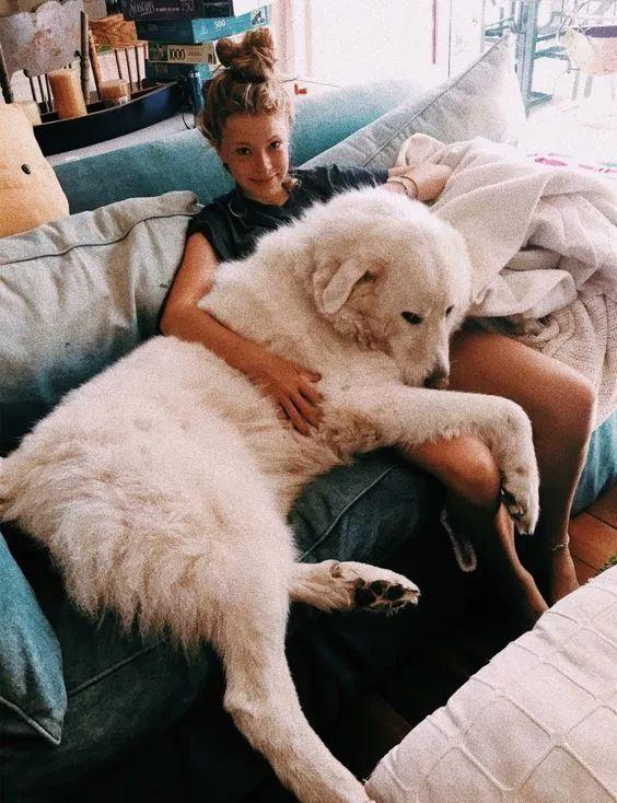 当宠物爱上了旅行,画风萌哭了全世界...