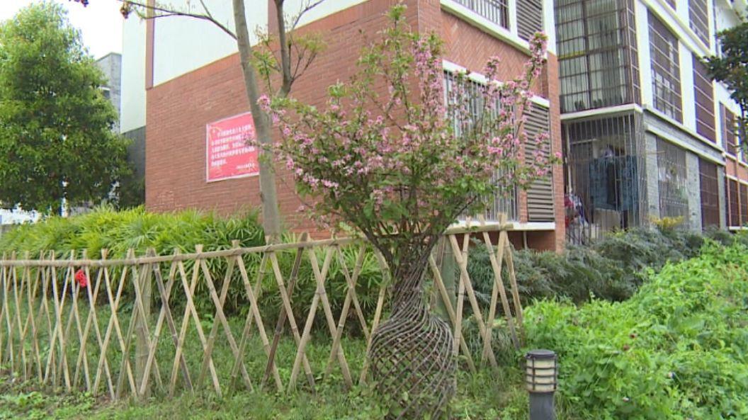 春声行动 居民自治 共建绿色社区