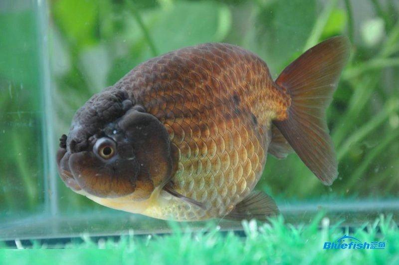 家居养鱼的风水布局,阳台放置鱼缸养鱼合适吗