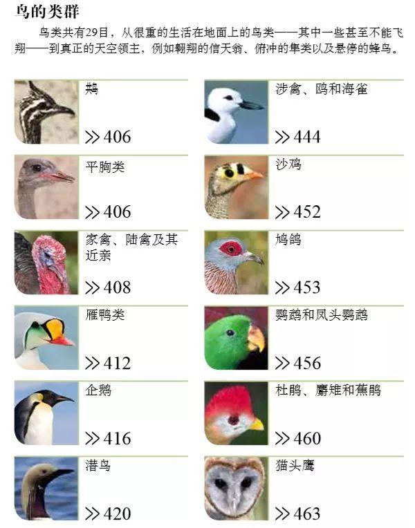 DK博物大百科 插图