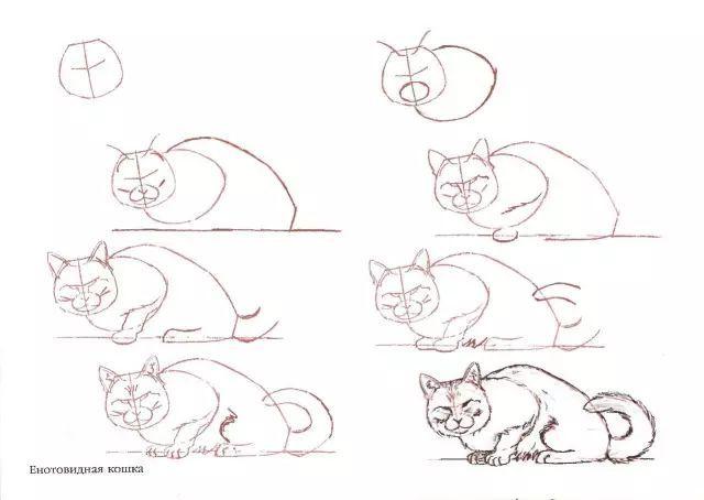 干货丨简单点,50种猫的画法直接上