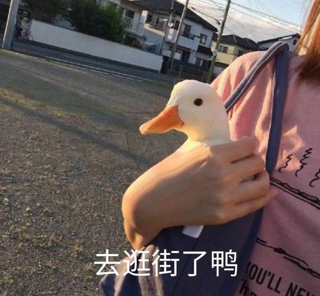 小白鸭表情包 今天也要开心鸭