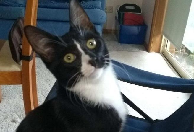 澳6个月小猫被洗衣机滚半小时 幸存但迷失方向
