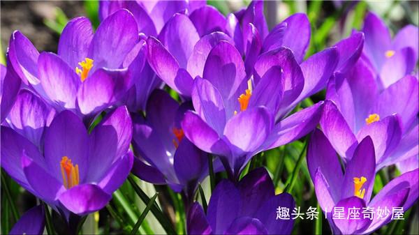 3月下旬天喜闪耀,贵人相助,财运一往直前,赚得万贯家财的生肖