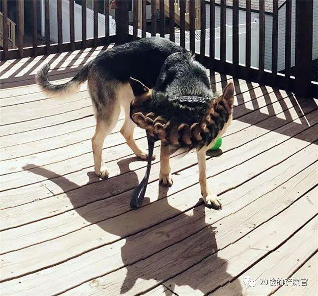 有一个不会拍照的沙雕主人,简直是狗子的灾难