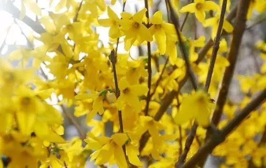 花与人的性格,你是几月份的花?