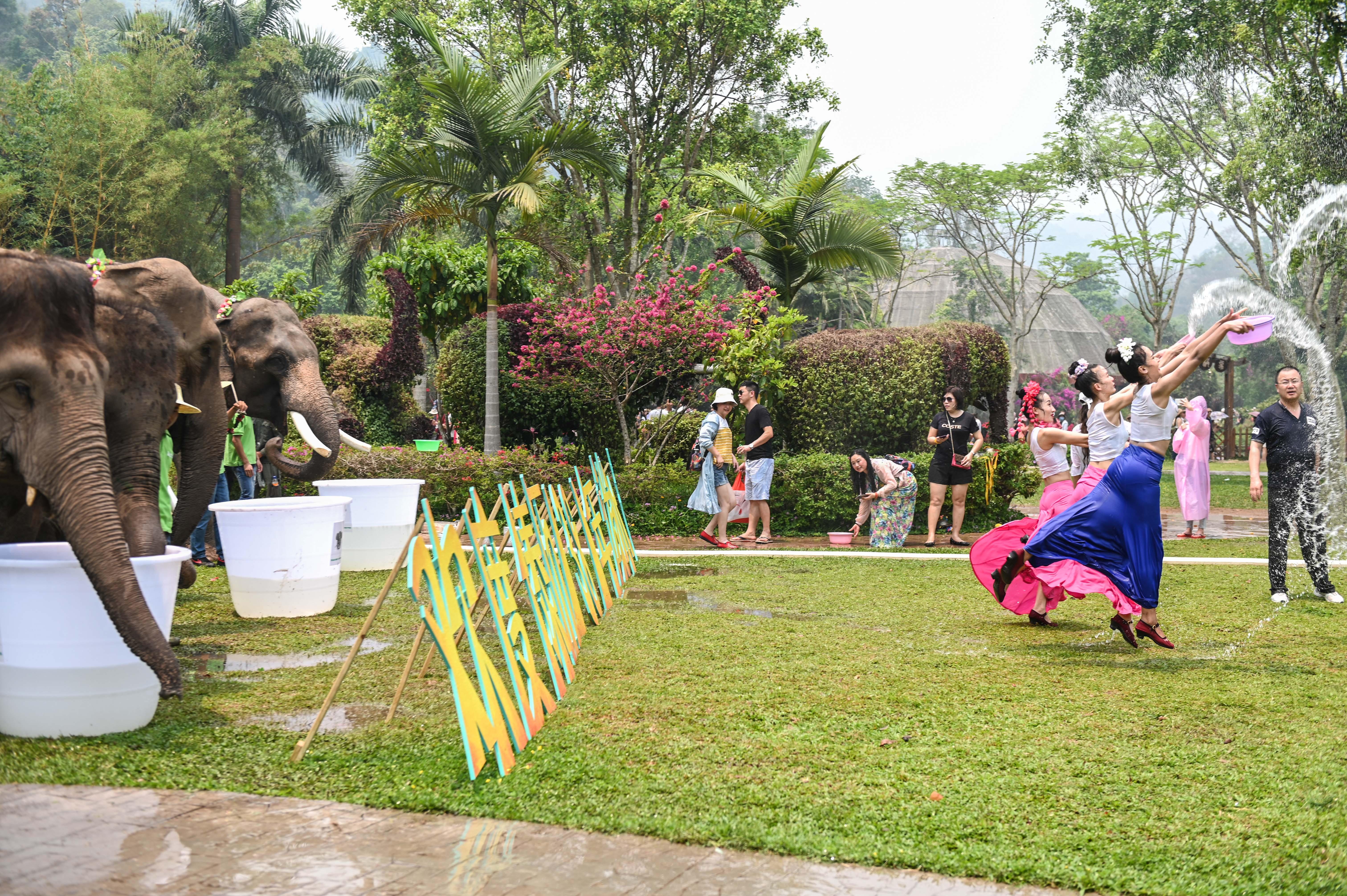 大象泼水庆傣历新年