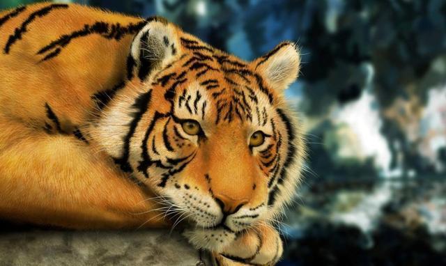 老虎 狮子 熊 豹子 狼谁最历害