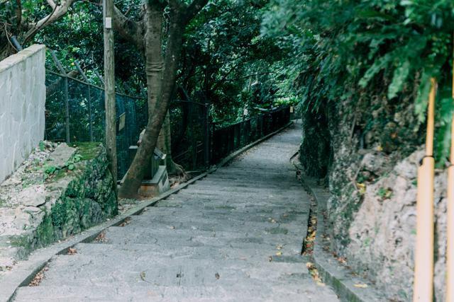 日本最适合情侣约会的一条小路,风景很美,超适合来拍ins大片