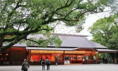 2019名古屋樱花季时间是什么时候?