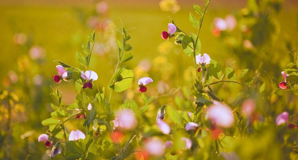 形容春暖花开的优美句子