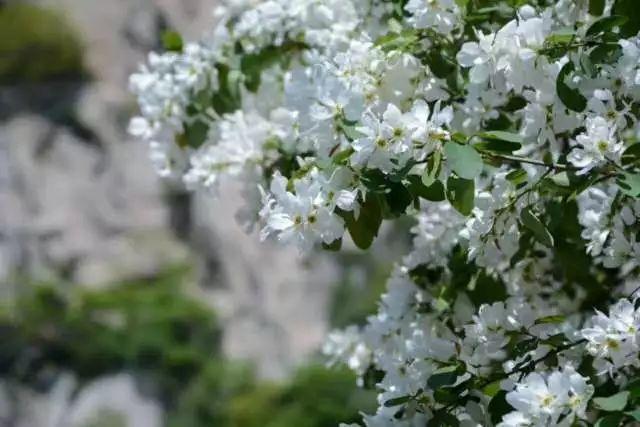 <b>春游去哪儿 秦岭深处有个免费赏花秘境~</b>