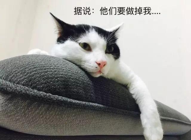 猫咪要做绝育,需要准备什么?