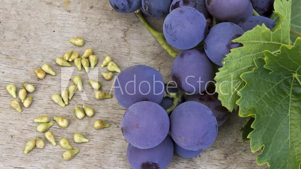 拼颜值的时代,葡萄籽精华你得来点儿?