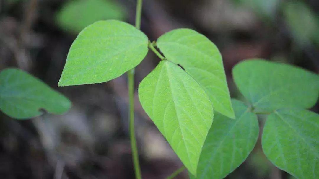 《诗经》中的植物,美了千年,快和孩子一起来读吧