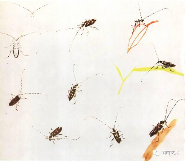 珍贵 王雪涛小写意昆虫画法示范