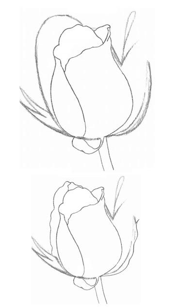晨光优品系列怎么样 手残党快来,教你轻松用铅笔画出玫瑰花
