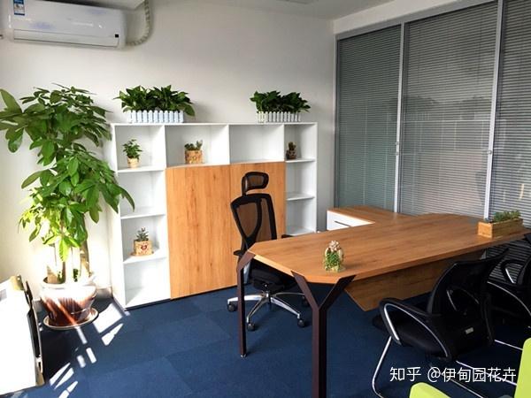 办公室植物租摆的优点有哪些?