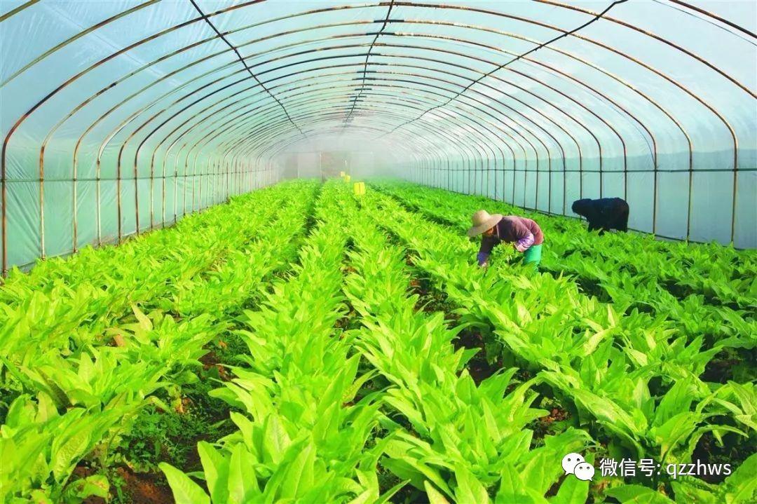 什么是智慧农业?在北京房山你看人家这农民的把式