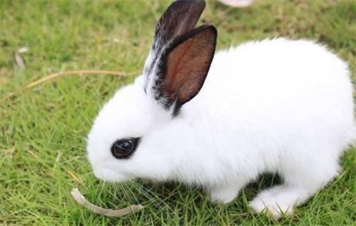 兔子不活泼不爱吃食,兔子不活跃了怎么办
